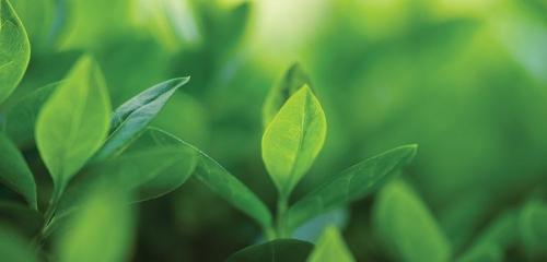 Monitoring količine biogoriva